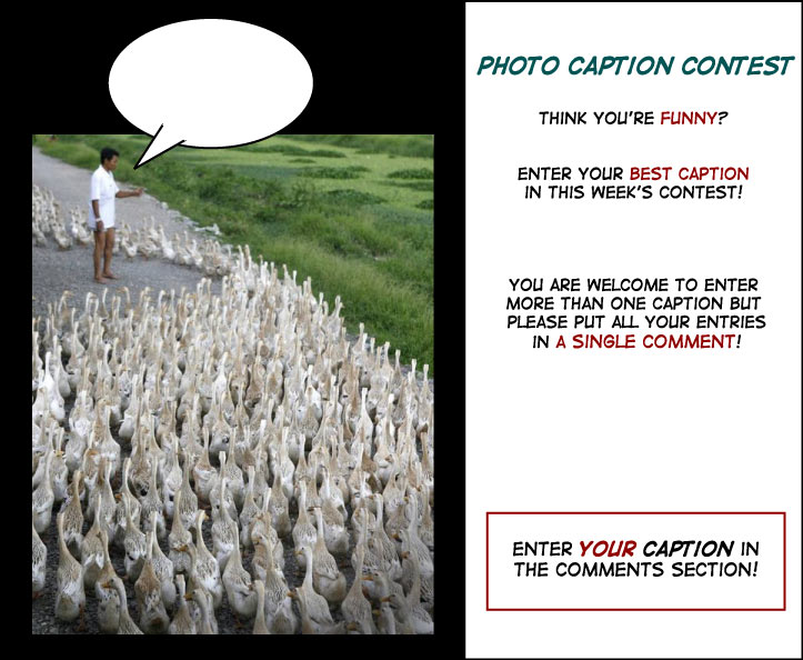 Political Ducks – Photo Caption Challenge cartoon