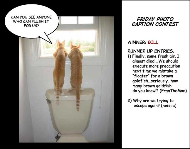 Two cats on toilet photo contest