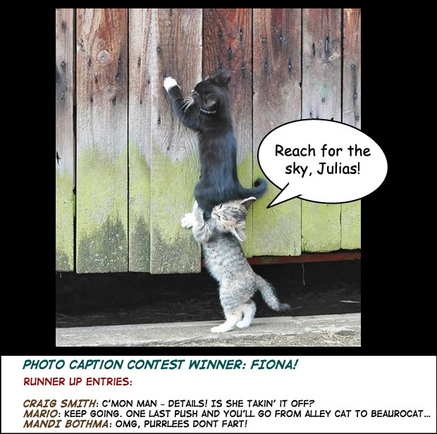 Help a Cat Up Photo Caption contest