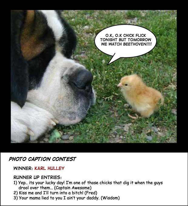 St Bernard chick photo contest