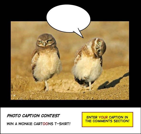 Two owls photo caption