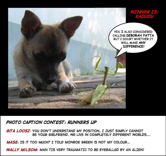 Dog grasshopper photo caption