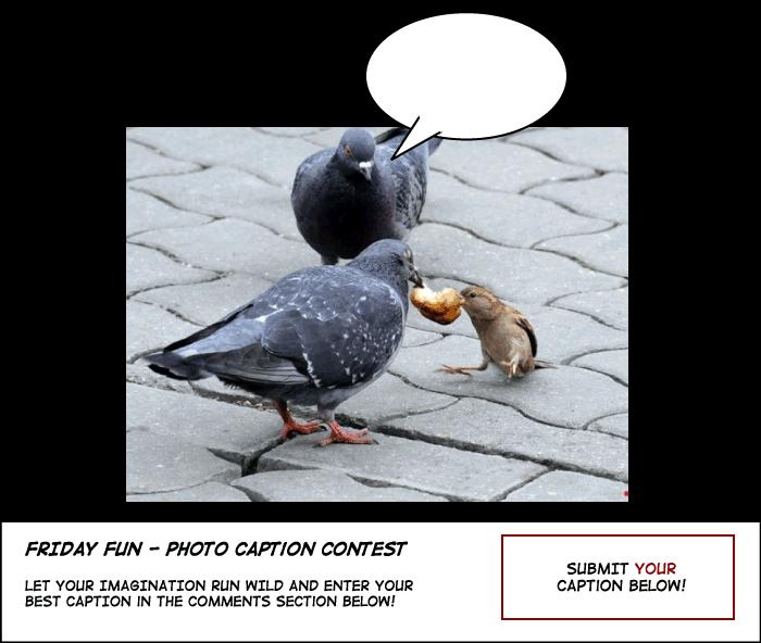 Bird Politics caption