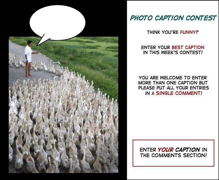 Political ducks photo contest