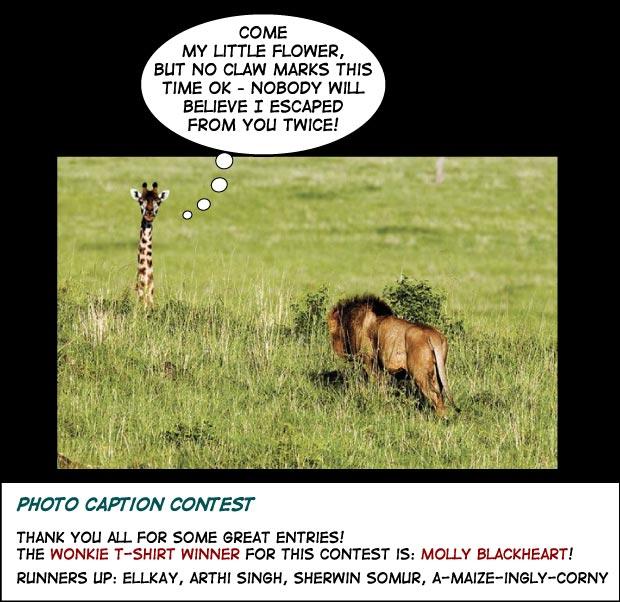 Lion meets Giraffe photo contest