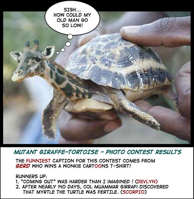 giraffe tortoise photo cartoon